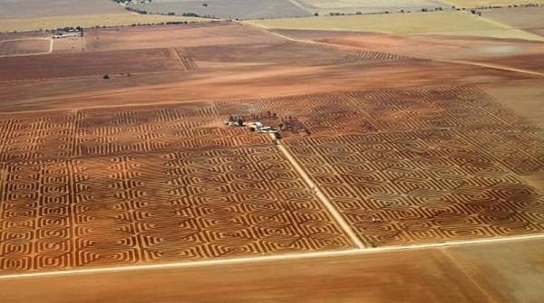 поле в австралии