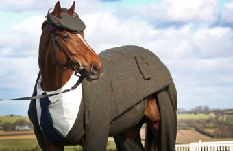 конь в пальто
