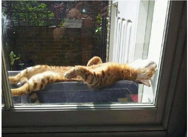 кот греется на за окном