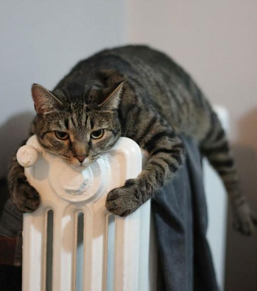 кот греется на радиаторе
