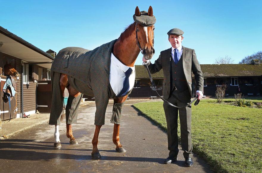 лошадь в пальто