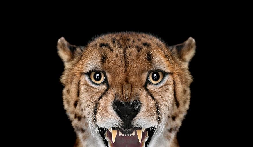 Невероятные фотографии диких животных