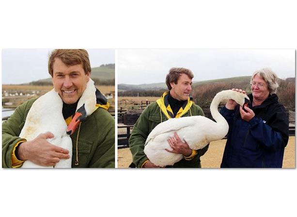 лебедь и человек интересные фотографии