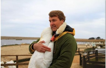 лебедь обнимает человека