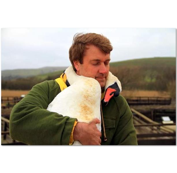 лебедь обнимающий человека фото