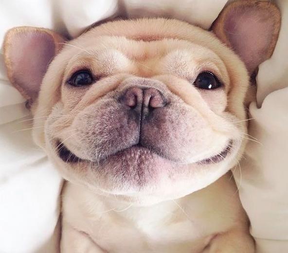 очень милый щенок фото