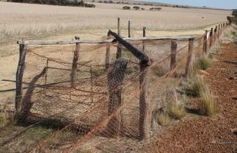 самый длинный забор в мире в Австралии