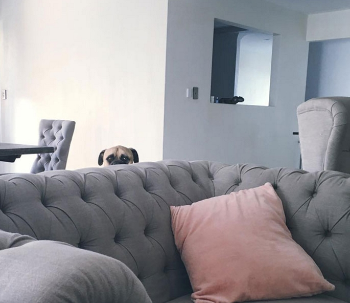 собака которая постоянно следит за хозяином
