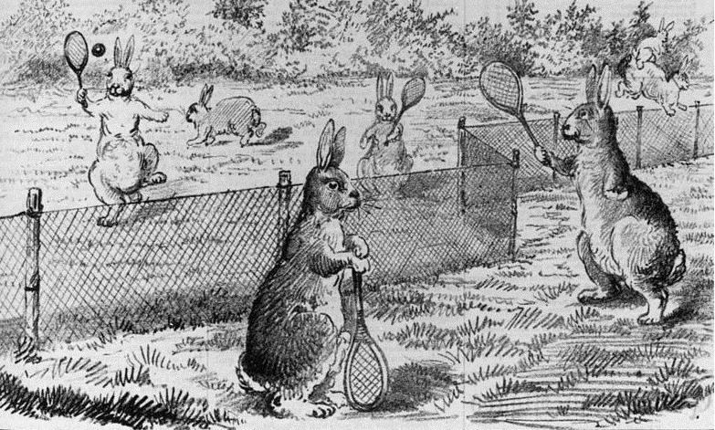 забор от кроликов в Австралии