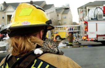 кот которого спасли пожарные