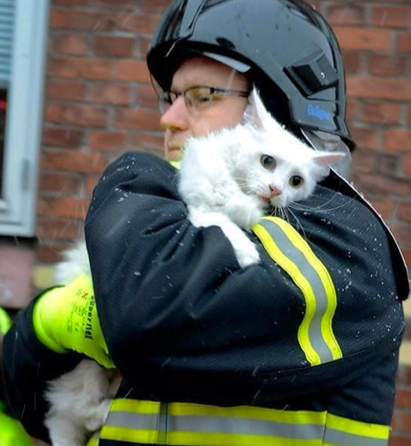 котенок на плече у пожарного