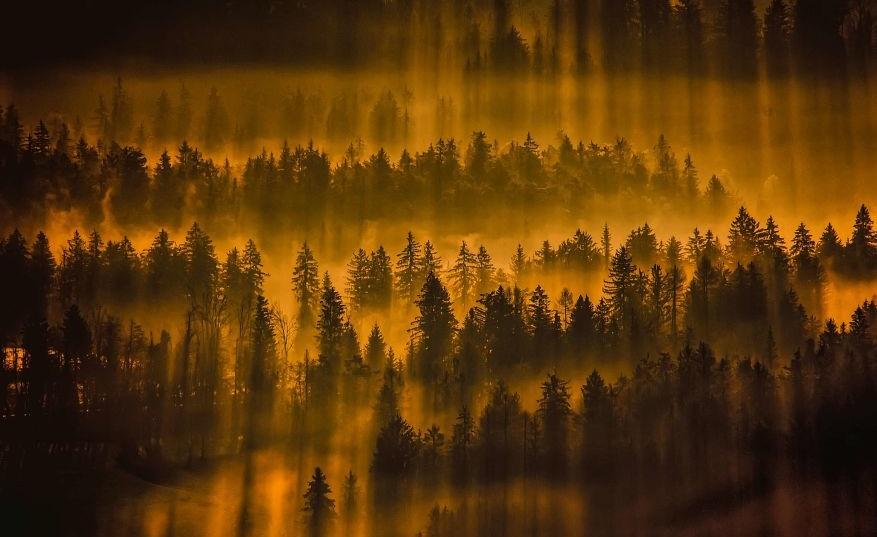 леса и туманы Словении