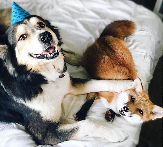 лисенок и собака