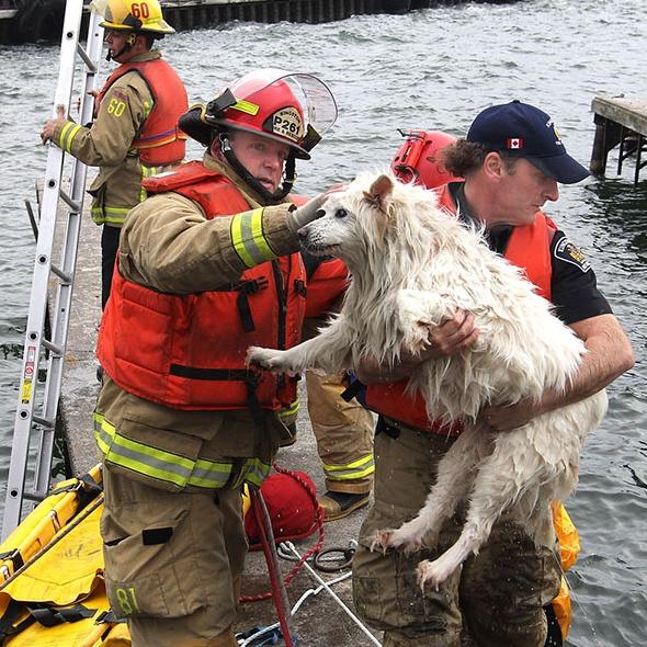 пожарные спасли собаку