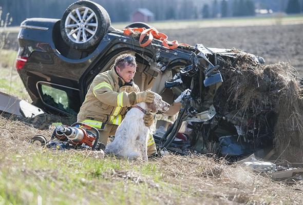 пожарный гладит собаку после аварии