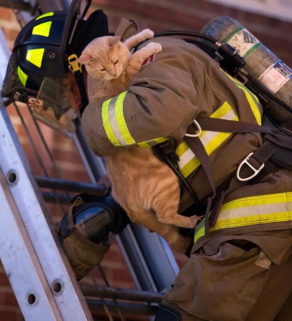 пожарный спасает кота из горящего дома