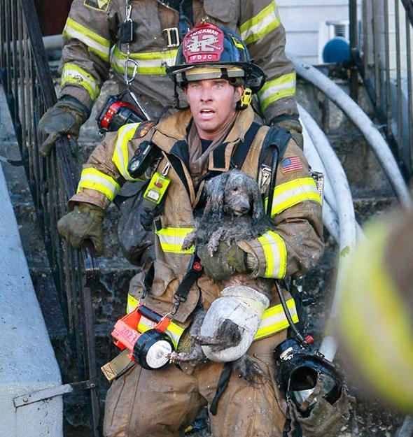 пожарный спасает собаку из огня