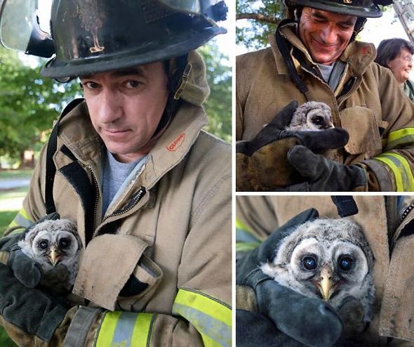 спасенный пожарным совенок
