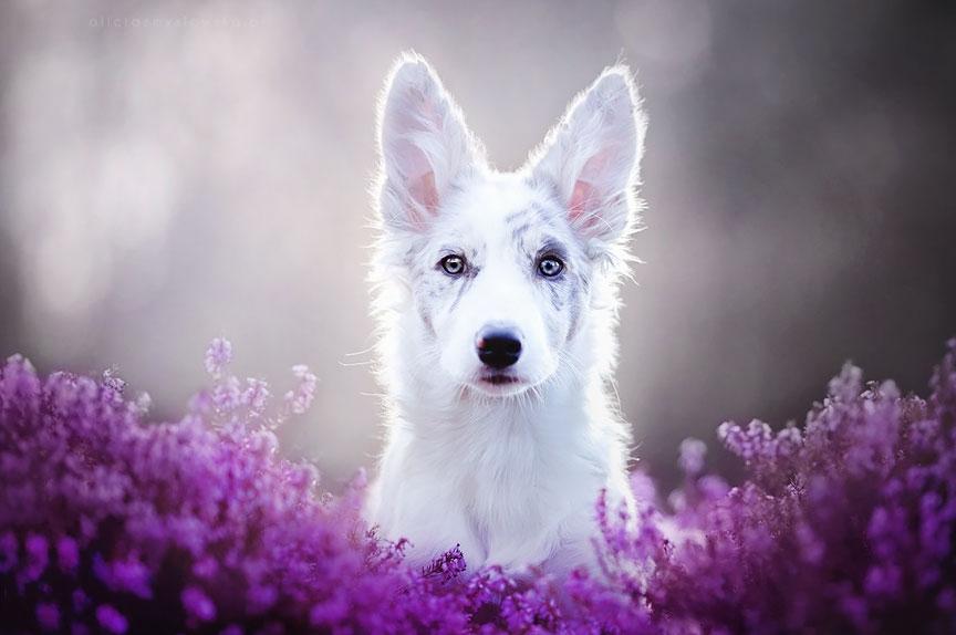 фотографии собаки в цветах