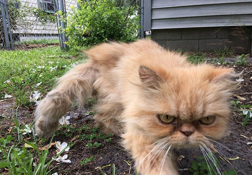 фото злого котенка