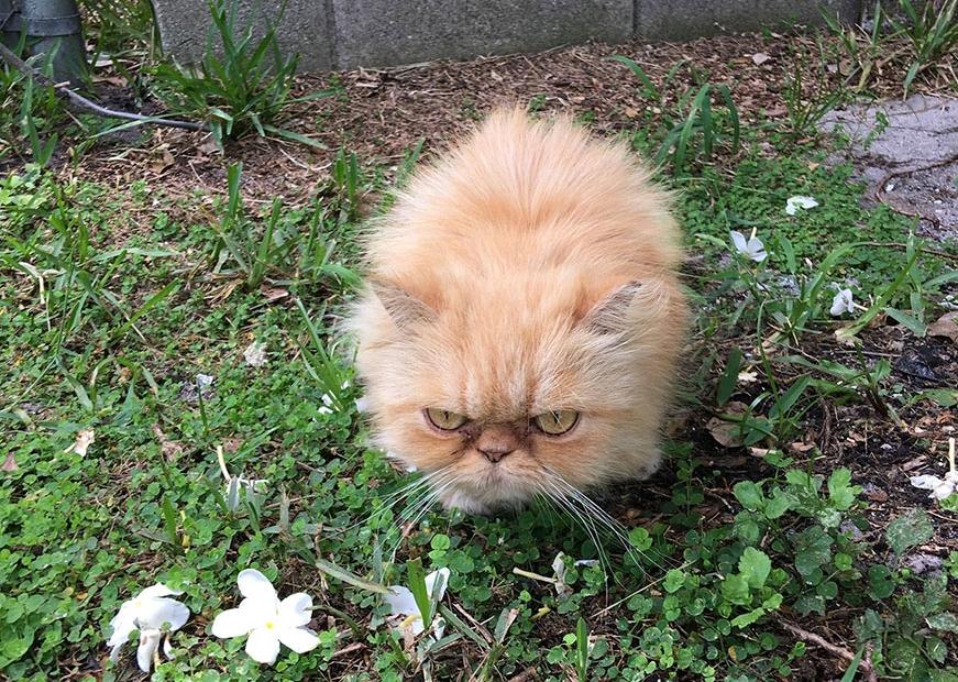 очень злой котенок