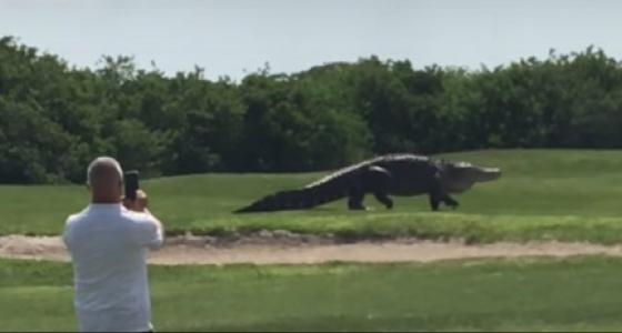 самый большой аллигатор во флориде