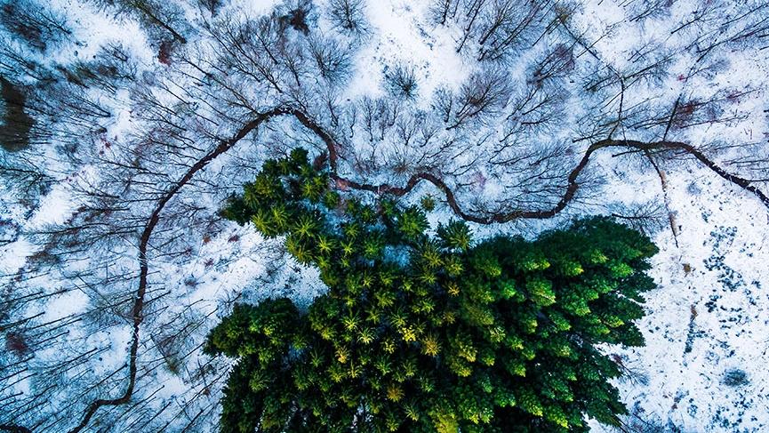 датский лес фото с дрона