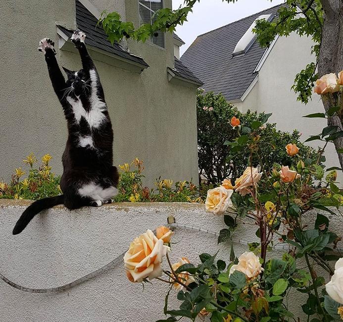 кот делает зарядку