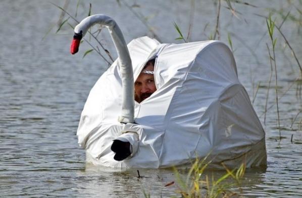 как фотографы снимают лебедей