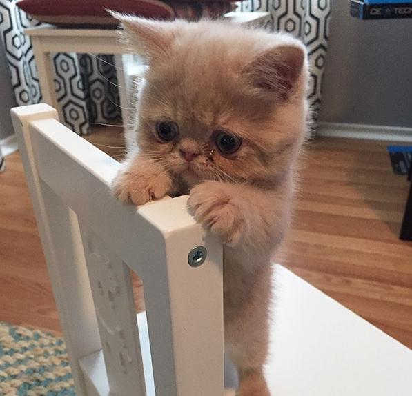 20 самых симпатичный котят