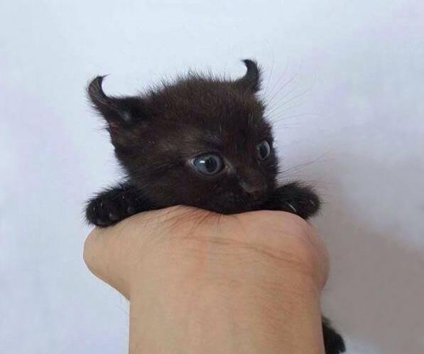 котенок похожий на чертенка