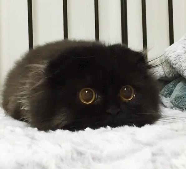 котенок с самыми большими глазами