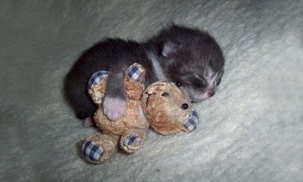 котенок заснувший с игрушкой