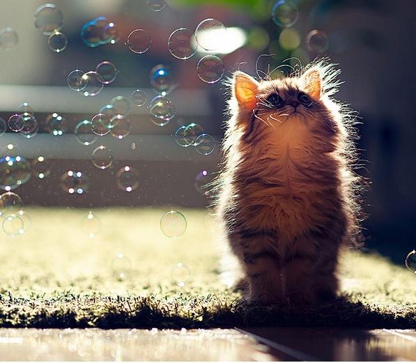 мыльные пузыри и котенок
