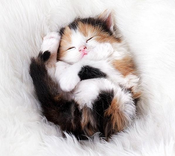 сладко спящий котенок