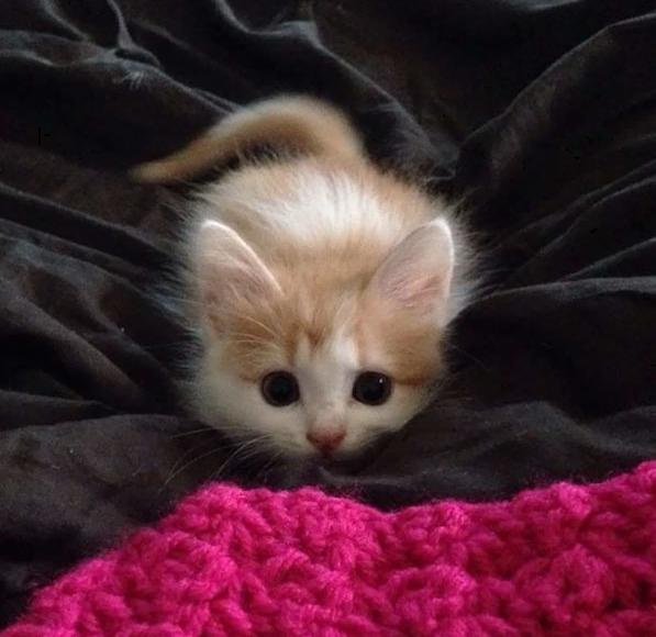 спрятавшийся котенок
