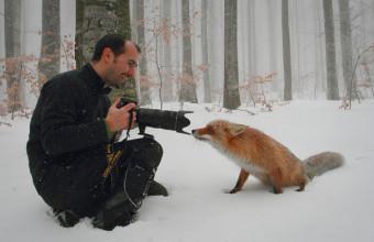 как сделать фото лисы