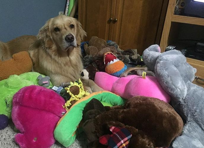 собака спит на игрушках