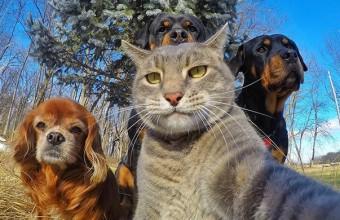 селфи кота и собак