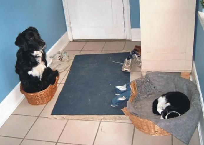 кот выгнал собаку