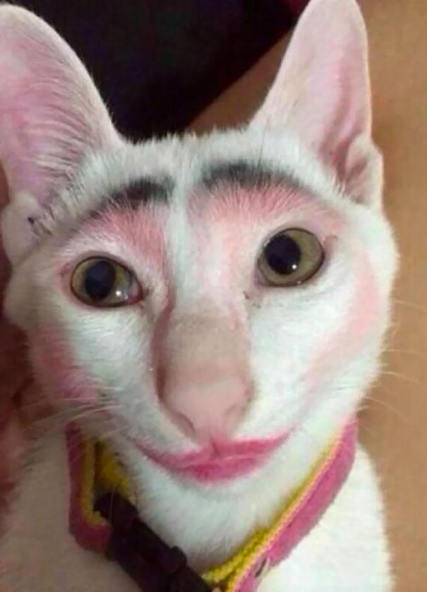 раскрашенная детьми кошка