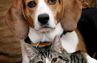 фотография кошки и пса