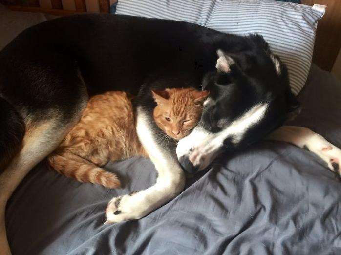 кошка и пес спят