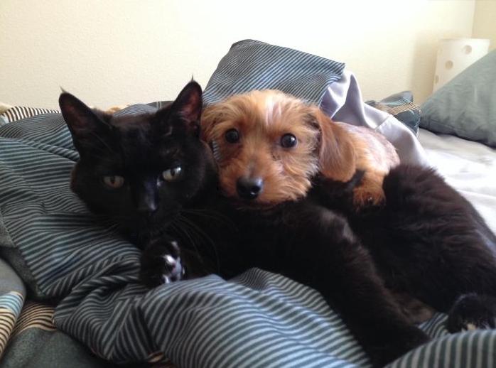 черный кот и щенок