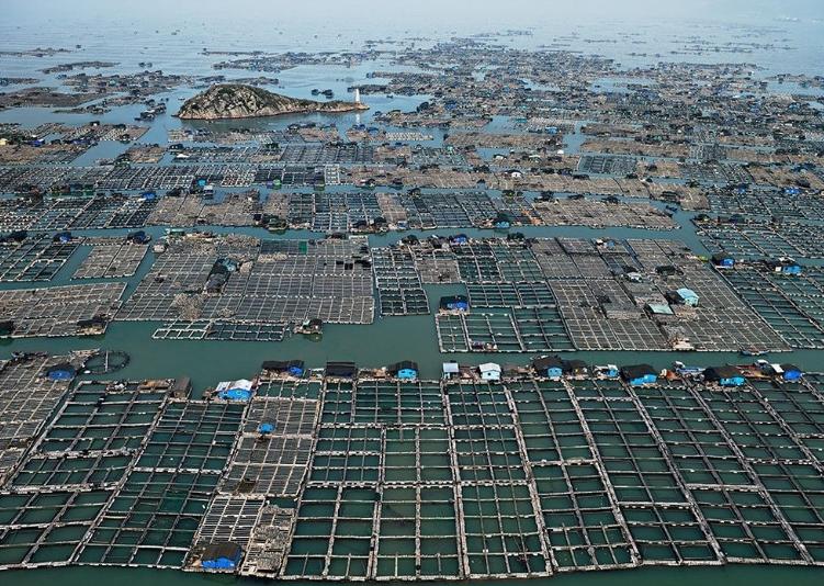 плавучие фермы Китая
