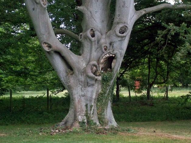 странное древо
