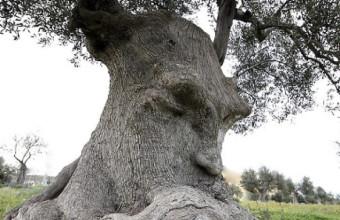 дерево с лицом