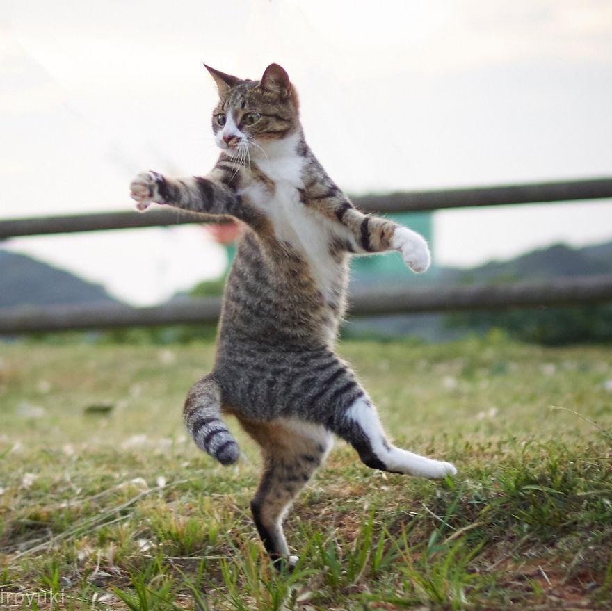 кот как ниндзя