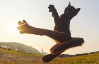 удар кота фото