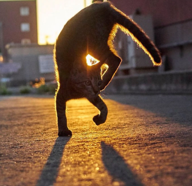 кошка как ниндзя
